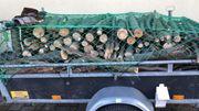 Brennholz Rundholz frisch