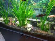 Aquarium 120x50x60 360 Liter mit