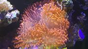 Meerwasseraquarium ca 600 L