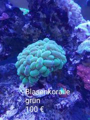 meerwasseraquarium Auflösung sps lps weiche