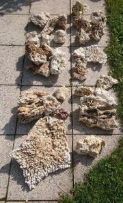 Totgestein Meerwasser Aquarium Steine
