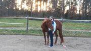 Horsemanship Beritt Problempferde Pferdetrainer in