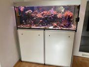 Meerwasser-Aquarium komplett mit Fischen etc