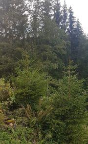 Suche Waldparzellen im Vorderwald zum