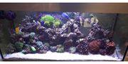 Meerwasser Nano Aquarium