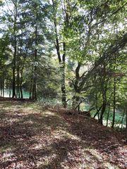 Waldgrundstück Nähe Neuhemsbach