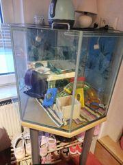 terrarium achteck nagarium mit tisch