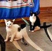 Katzenmädchen suchen zuhause