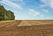 Ackerland zu kaufen oder pachten