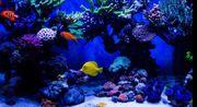 Suche Meerwasser Fische Korallen Schnecken