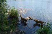 59- Ganzwöchige ganztägige Hundebetreuung Hundesitting