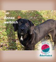 Annea - ist eine wunderbare Hündin