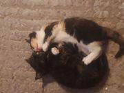 4 Süße Kätzchen