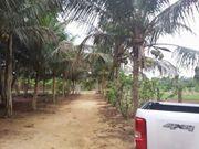 Brasilien 40 Ha grosser Bauernhof