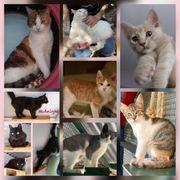 Wunderschöne Kitten Baby Katzen Kater