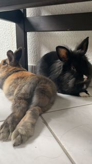 sehr susse Kaninchen zum verkaufen