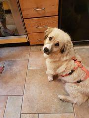 Lassie sucht ein liebevolles Zuhause