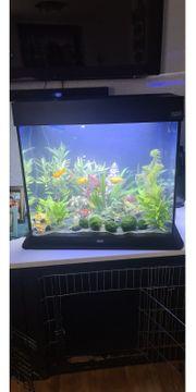 aquarium Lido 120