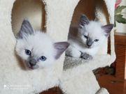 Super süße Katzenbabys