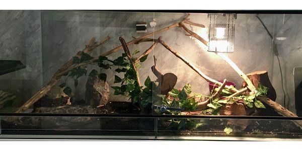 Terrarium mit 2 Schlangen