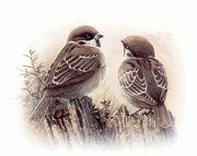 S O S Suche Vogelfreunde