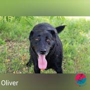 Oliver - verkuscheltes Sommerkind sucht liebevolles