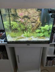 Juwel Aquarium Lido 120 mit