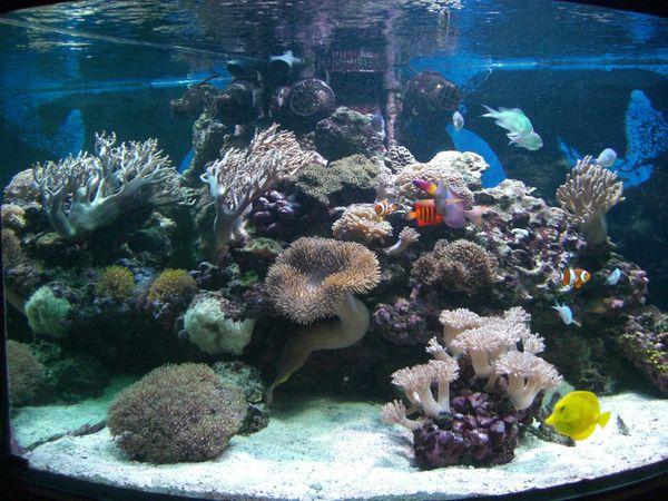 Meerwasseraquarium 350 Liter Eckaquarium kmpl