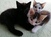 Besondere Kätzchen für besondere Menschen