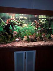 Aquarium inklusive Fische plus Schrank