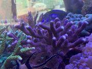 Meerwassers Korallen