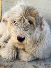 Tierschutz Zafira sucht ihr Glück