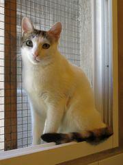Katze Dina sucht ein Zuhause