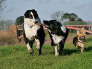 Zirbelhunde - Dogwalking mobile Hundebetreuung