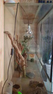 Großes Terarium zu verkaufen