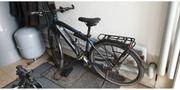 Bulls Lacuba Evo E-Bike - sofort