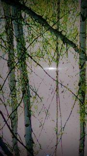 wunderschönes Waldposter für Wand und