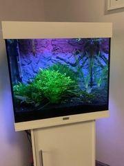 Juwel Lido 120 Aquarium in