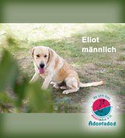 Eliot - ist ein freundlicher Junge