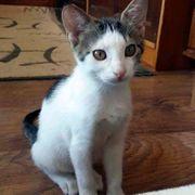 Katzenmädchen Sari möchte bald auf
