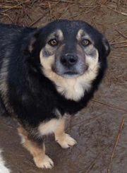 JARO - liebenswerter Hunde-Schatz - öffnest du