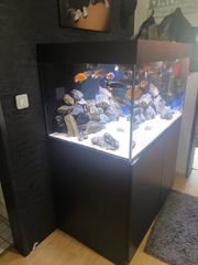 Komplettes Süßwasser Aquarium mit Malawis