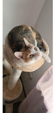 Stella sucht einen Deckkater