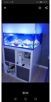 Meerwasser aquarium Ablegerbecken Korallen
