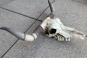 Bullenschädel Longhorn Geweih Schädel
