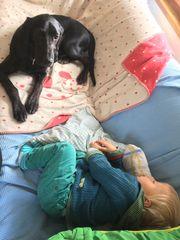 Verkaufe verschmuste Bloodhound-Mischlingshündin