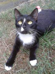 Suche Katzenbabys 2 Kitten