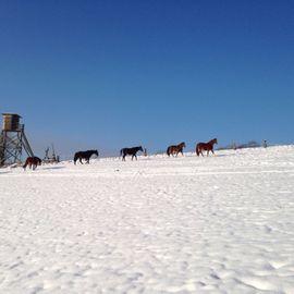 Pferdeboxen, Stellplätze - Offenstallplatz frei