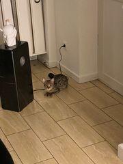 F2 Kitte