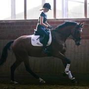 Reitbeteiligung an Sportpferd zu Vergeben